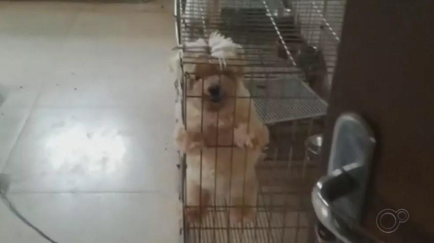 Animais foram encontrados em situação de maus-tratos em Boituva — Foto: Polícia Civil/Divulgação