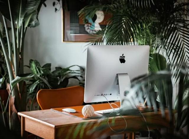 Redução nos níveis de estresse e ansiedade é um dos benefícios gerados pela presença das plantas (Foto: Andreas Dress / Unsplash / Creative Commons)