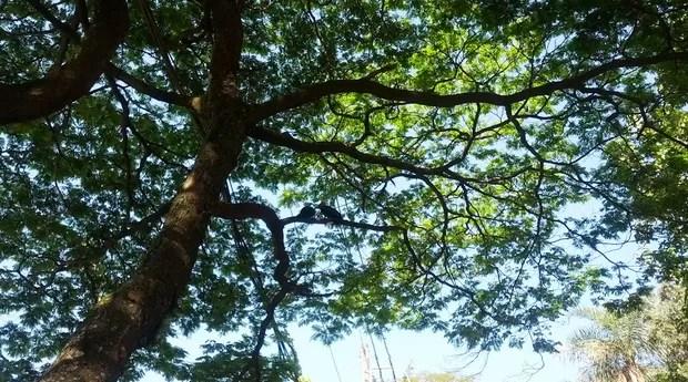 A Primeira Árvore do Mundo - Como Surgiu?