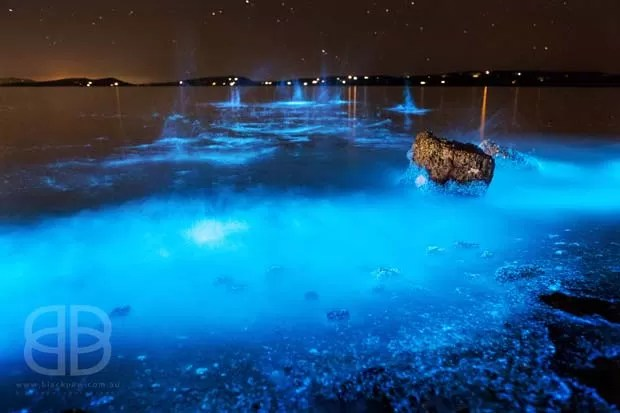 Fotógrafa registrou mar na costa da Austrália emitindo brilho azul intenso (Foto: Jo Malcomson)