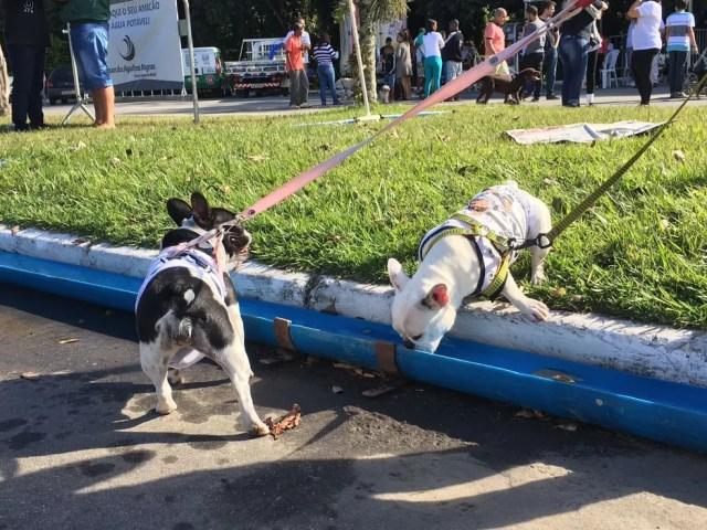 Calhas com água fresca para os animais na Caminhada do Amicão em Resende (Foto: Maria Clara Jordão/TV Rio Sul)