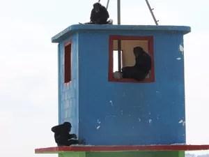 Jimmy (sentado na janela) 'adotou' três filhotes que foram abandonados pela mãe (Foto: Geraldo Jr./G1)