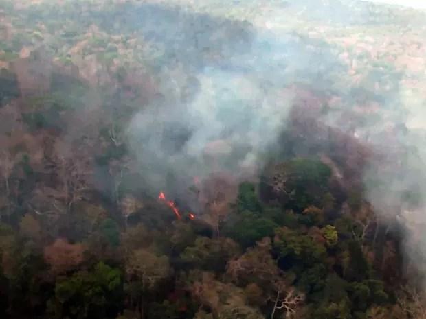 185 mil hectares de floresta na reserva indígena já foram destruídos (Foto: Reprodução / TV Mirante)