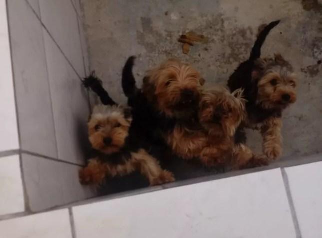 Mais de 1,5 mil cães serão levados de canil de Piedade com denúncia de maus-tratos — Foto: Arquivo Pessoal