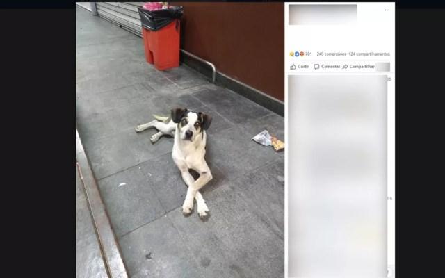 Cachorro teria sido envenenado e espancado por funcionário de unidade do Carrefour  — Foto: Reprodução/Facebook