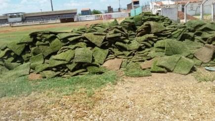 Resultado de imagem para gramado do estádio pereirão passa por reparos