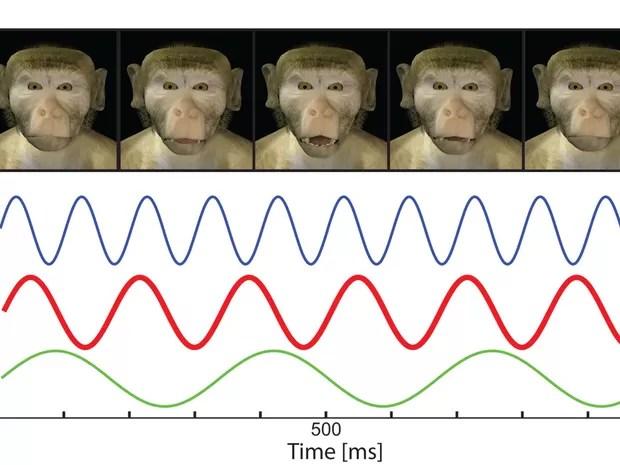 Movimentos da fala humana evoluíram das expressões faciais dos nossos ancestrais primatas (Foto: Divulgação/Universidade Princeton/Universidade Glasgow/Instituto Max Planck)