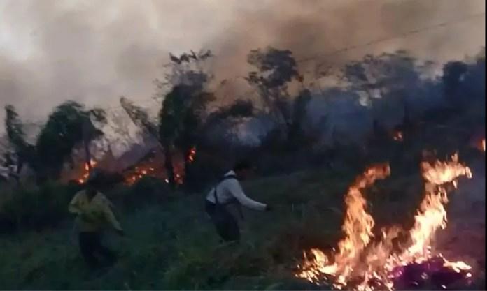Produtores tentaram apagar fogo para evitar que destruísse casas — Foto: Reprodução