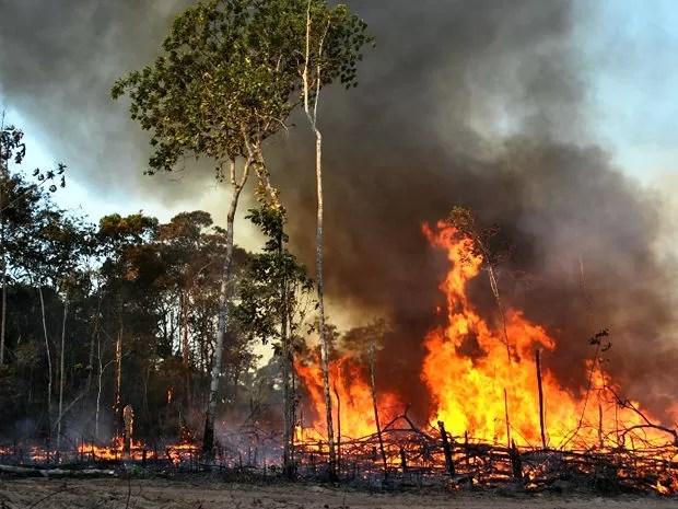 O fogo teve início no dia 3 com a queima de roça próximo a outra aldeia (Foto: Sandro Vieira)