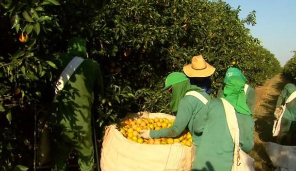 Citricultura ajudou a alavancar vagas em Bebedouro, SP (Foto: Reprodução/EPTV)