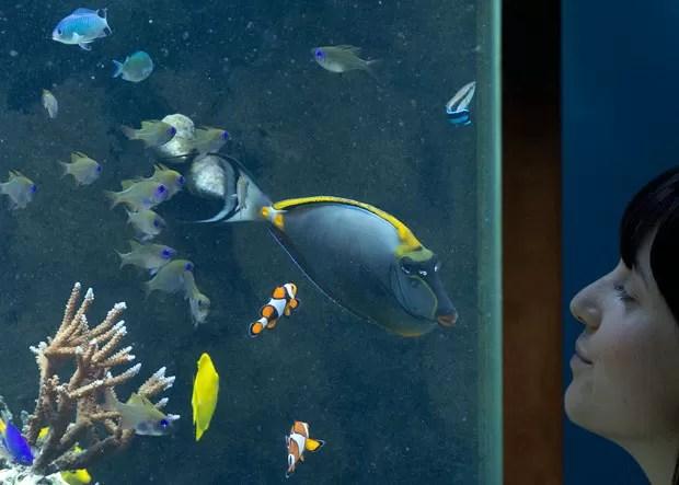 Peixe-unicórnio parece querer 'beijar' funcionária em aquário inglês (Foto: Alastair Grant/AP)