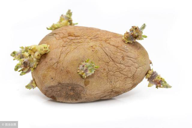 發芽的馬鈴薯還能吃嗎?終於搞清楚了! - 讀讀