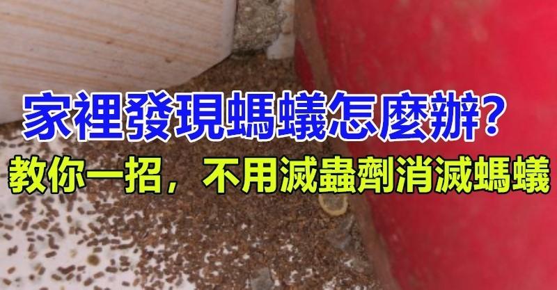 家裡發現螞蟻怎麼辦?不用擔心教你一招「不用滅蟲劑」消滅螞蟻 - 讀讀