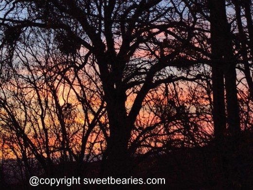I love how the orange, purple, and pink colors peak out from behind the oak trees to create this amazing silhouette.