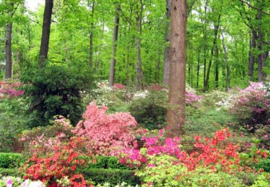 Garden Designs In North Carolina