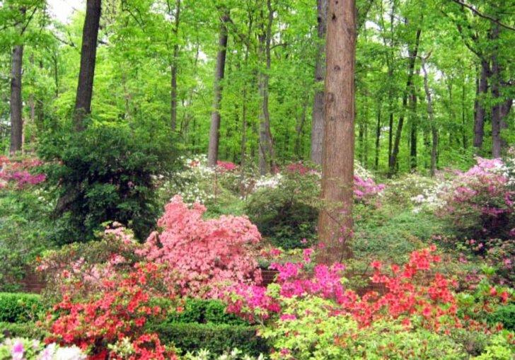 Garden Designs In North Carolina