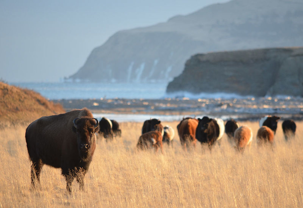The wilds of Kodiak Island.