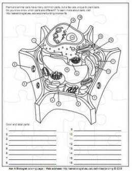 Plant & Animal Cells Lapbook