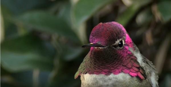 鳥界變色龍!他花2個月終於拍到變臉鳥 短短1秒就能「變出好幾張臉」在臺灣難得一見 - LOOKER 新鮮事