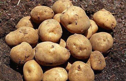 冬天減肥應該吃哪種主食?營養師建議:土豆、玉米、紅薯都是優選 | Giga Circle