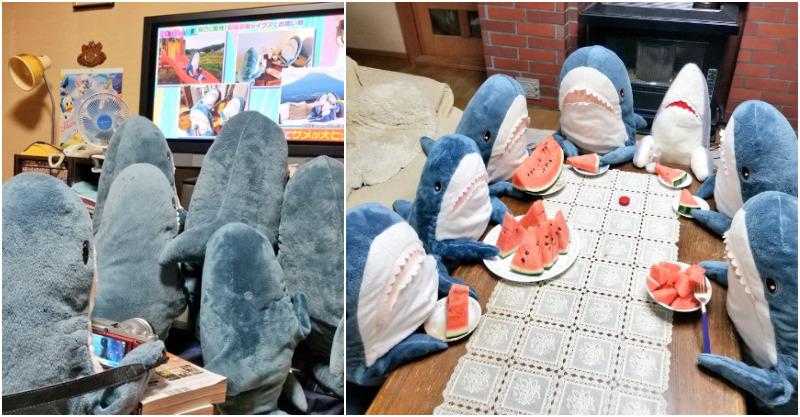5隻IKEA鯊魚玩偶「狂曬幸福日常生活」!一起吃西瓜看電視「看到開車出遊畫面」網融化:鯊鯊們超守法 - POP543