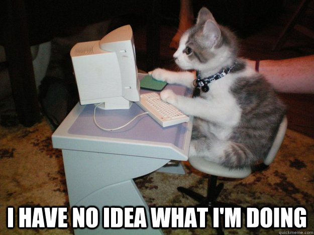 Image result for cat at computer i have no idea what i'm doing