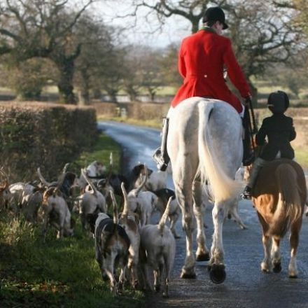 Hunting ban backed by 84% of voters, poll finds