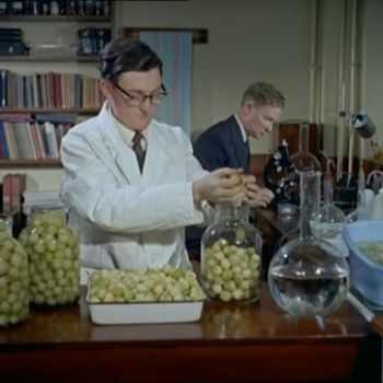 In 1959, British Scientists Carefully Perfected the Pickled Onion