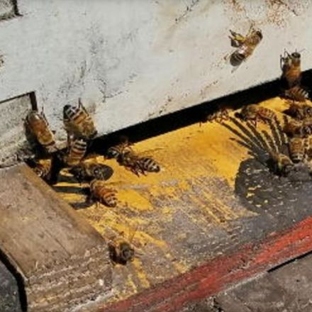 Calif. man accused of stealing nearly $1M worth of bees