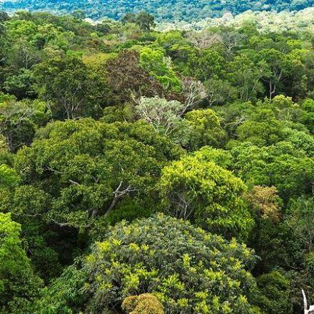 Norway spurs $400mn rainforest fund at Davos