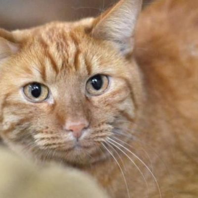 Missing Colorado cat rescued from 25-foot hole in Texas