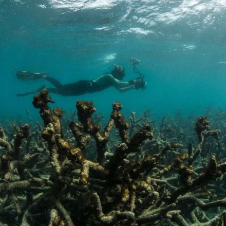 Great Barrier Reef obit maybe not so premature