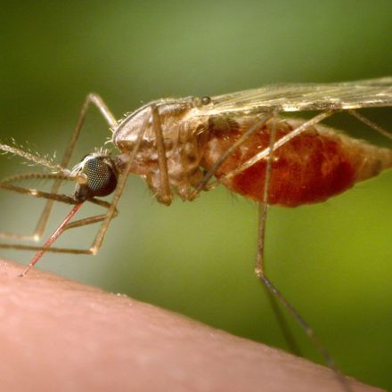 Mosquito Behavior Is Evolving, and Malaria Is Benefitting — NOVA Next | PBS