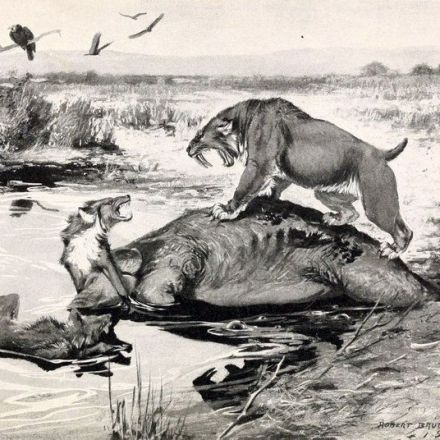 Saber-Toothed Cats Paid a Stiff Price for Lunch
