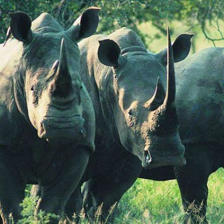 Researchers Are Debating Whether to Privatise Endangered Species
