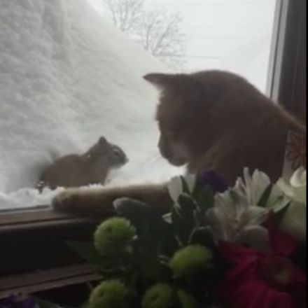 A Snowbound Orange Cat Repeatedly Scrapes at the Window to Get at a Squirrel On the Other Side