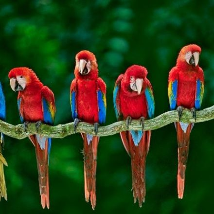 Prehistoric Native Americans farmed macaws in 'feather factories'