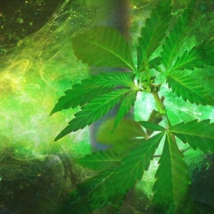 Here Are 100 Scientific Studies Proving Cannabis Cures Cancer