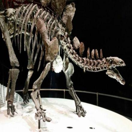 The Stegosaurus Plate Controversy