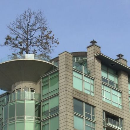 $554K price tag to replace iconic tree at top of condo building