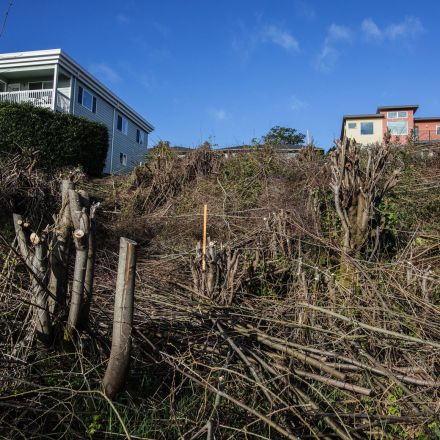 Homeowners to pay $440K as the city settles one lawsuit over West Seattle clear-cut