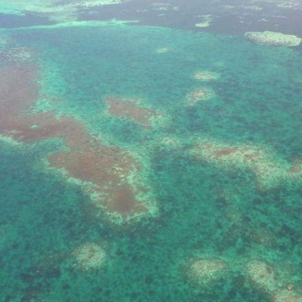 'Devastating' coral loss in South China Sea