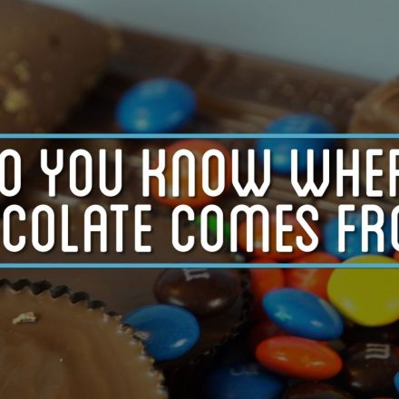 Do You Know Where Chocolate Comes From?