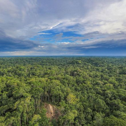 Amazon faces death spiral of drought and deforestation, scientists warn