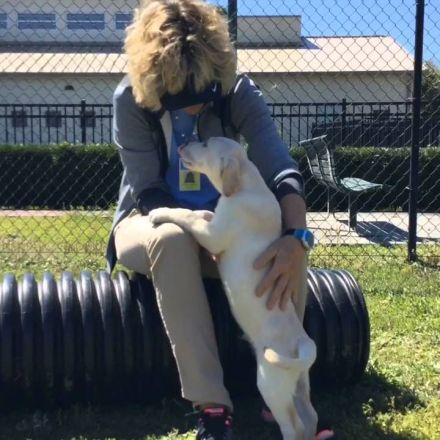 Fecal Transplants At Southeastern Guide Dogs In Palmetto
