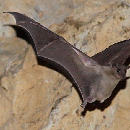 When Bats Squeak, They Tend To Squabble