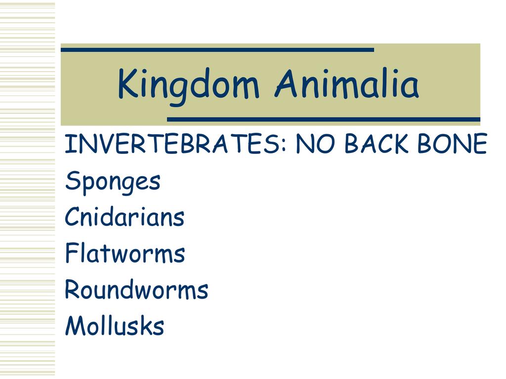 Sponges Cnidarians Worms Mollusks