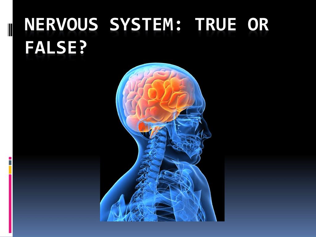Nervous System True Or False Intro