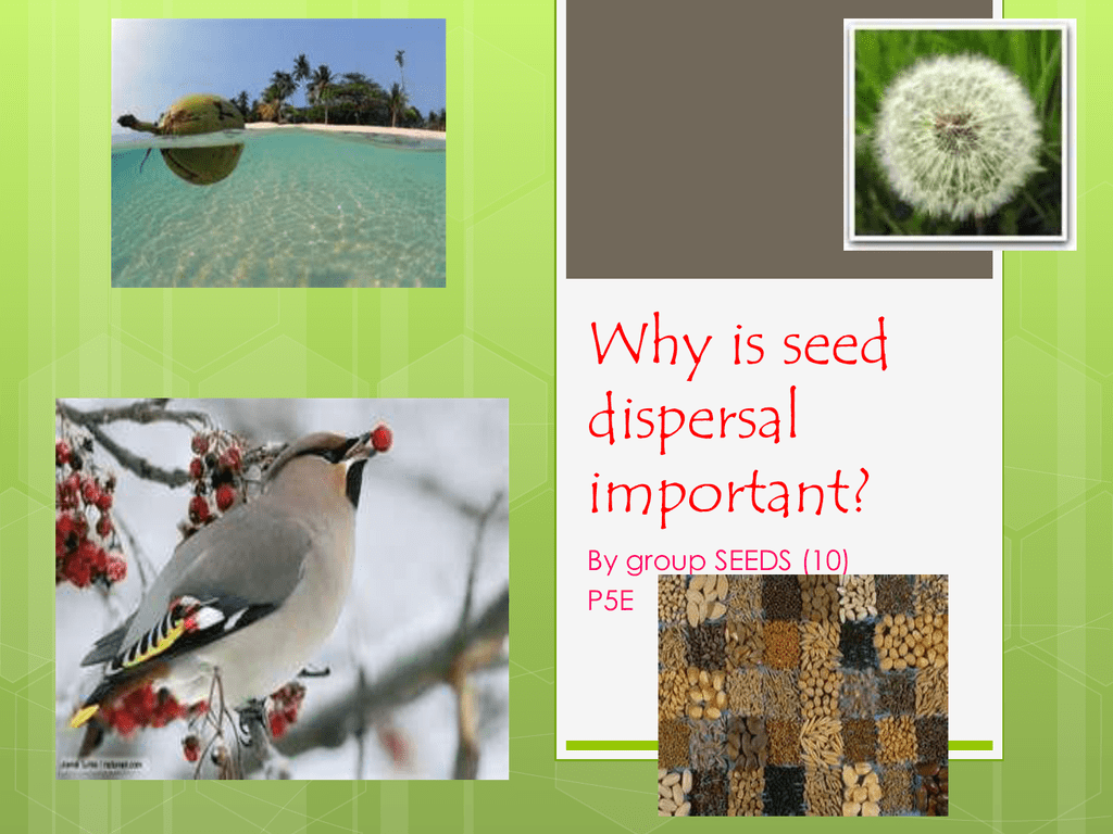 Why Is Seed Dispersal Important