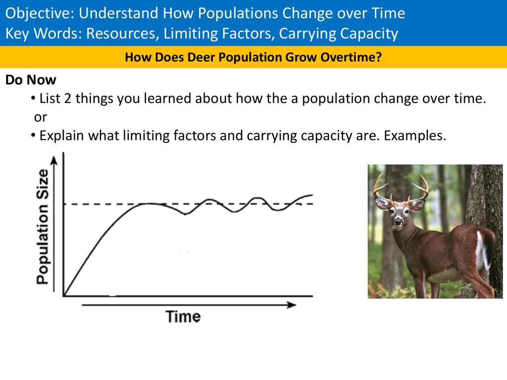 Deer And Wolf Population Worksheet Answers